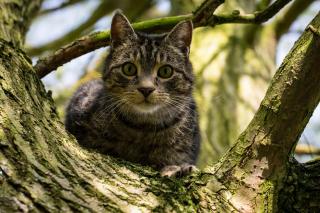 Crazy Cat - Obrázkek zdarma pro 1200x1024