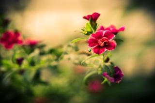 Картинка Macro Spring Flower HD на Android