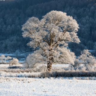 Hill in Snow - Obrázkek zdarma pro 1024x1024
