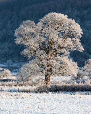 Hill in Snow - Obrázkek zdarma pro 132x176