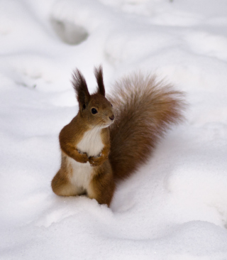 Funny Squirrel On Snow - Obrázkek zdarma pro iPhone 6 Plus