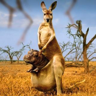 Kangaroo With Hippo - Obrázkek zdarma pro 320x320
