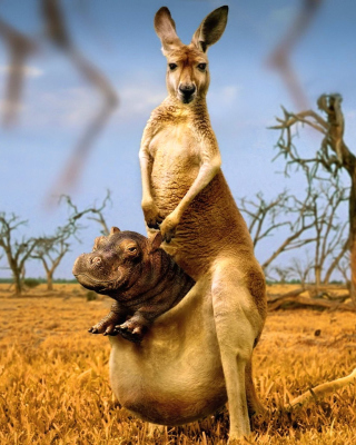 Kangaroo With Hippo - Obrázkek zdarma pro 128x160
