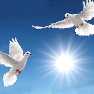 Pigeons - Obrázkek zdarma pro 1024x1024