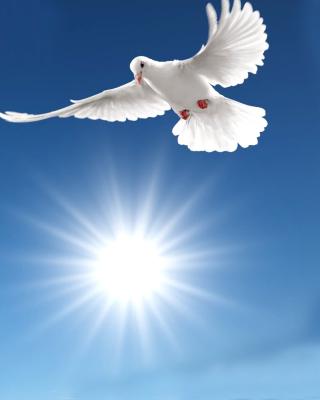 Pigeons - Obrázkek zdarma pro 352x416