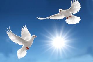 Pigeons - Obrázkek zdarma pro Fullscreen Desktop 1280x960