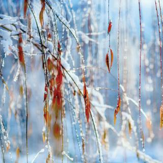 Macro Winter Photo - Obrázkek zdarma pro iPad mini 2