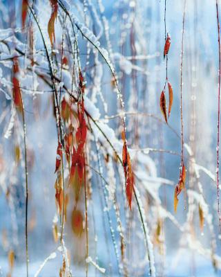 Macro Winter Photo - Obrázkek zdarma pro Nokia X1-01