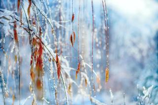 Macro Winter Photo - Obrázkek zdarma pro Samsung Galaxy Tab 4G LTE