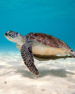 Sea Turtle Reptile - Obrázkek zdarma pro 640x960
