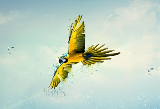 Born To Fly - Obrázkek zdarma pro Samsung Google Nexus S 4G