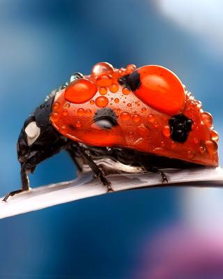 Maro Ladybug and Dews - Obrázkek zdarma pro Nokia 5800 XpressMusic