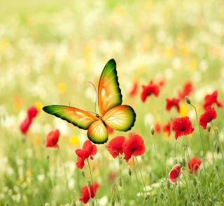 Butterfly - Obrázkek zdarma pro iPad Air