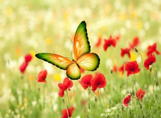 Butterfly - Obrázkek zdarma pro 480x320
