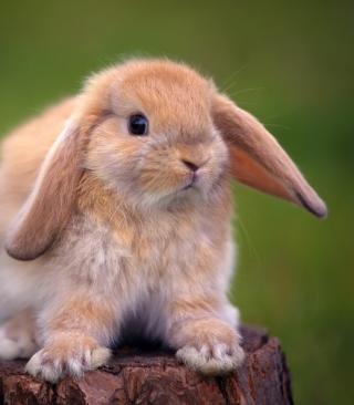 Sweet Bunny - Obrázkek zdarma pro Nokia C2-05
