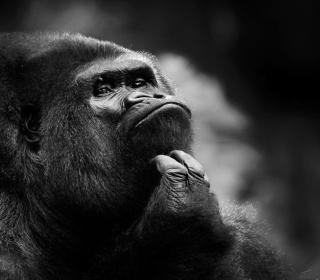 Thoughtful Gorilla - Obrázkek zdarma pro 128x128