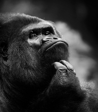 Thoughtful Gorilla - Obrázkek zdarma pro 176x220