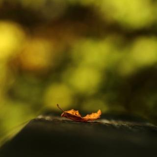 Macro Orange Leaf - Obrázkek zdarma pro iPad mini