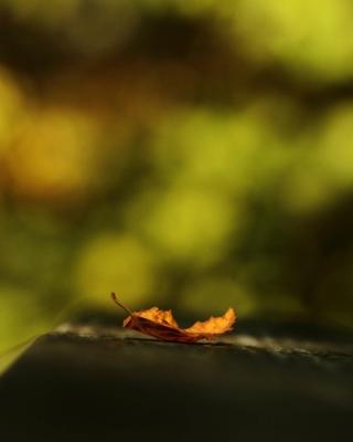 Macro Orange Leaf - Obrázkek zdarma pro Nokia Lumia 520