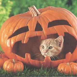 Pumpkin Cat - Obrázkek zdarma pro iPad