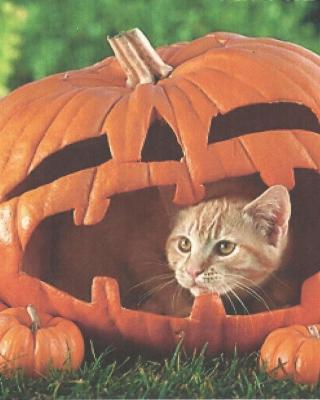 Pumpkin Cat - Obrázkek zdarma pro iPhone 5C