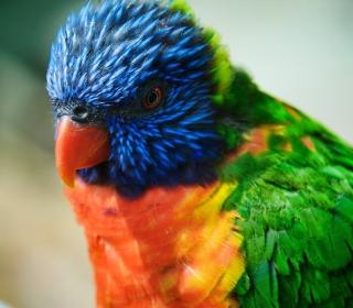 Colorful Parrot - Obrázkek zdarma pro iPad 3