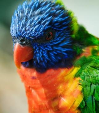 Colorful Parrot - Obrázkek zdarma pro iPhone 4S