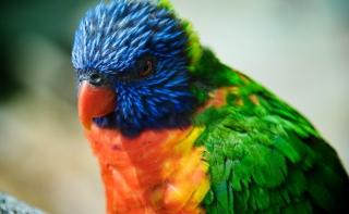 Colorful Parrot - Obrázkek zdarma pro 1366x768