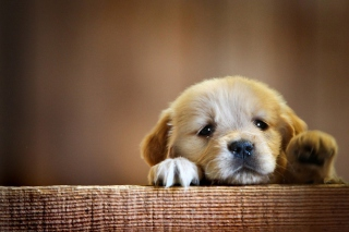 Обои Cute Little Puppy для телефона
