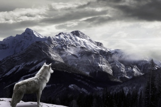 White Wolf In Mountains - Obrázkek zdarma pro Samsung T879 Galaxy Note