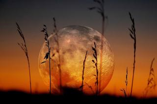 Big Moon - Obrázkek zdarma pro Fullscreen Desktop 1024x768