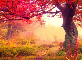 Free Autumn Forest Picture for Android, iPhone and iPad