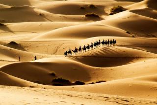 Camel Caravan In Desert - Obrázkek zdarma pro 480x400