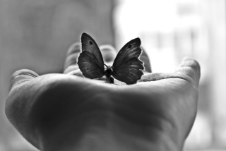 Butterfly In Hand Background for Android, iPhone and iPad