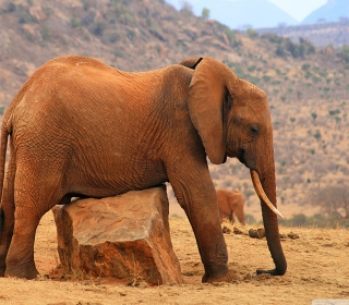 Elephant - Obrázkek zdarma pro iPad 2