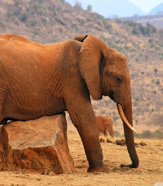 Elephant - Obrázkek zdarma pro iPhone 4S