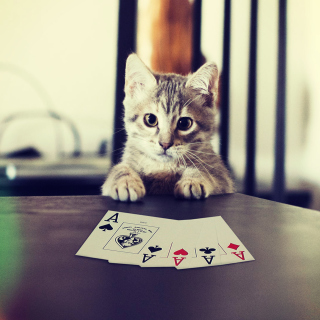 Poker Cat - Obrázkek zdarma pro iPad mini 2