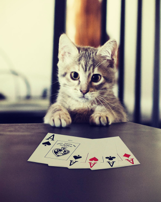 Poker Cat - Obrázkek zdarma pro iPhone 5S