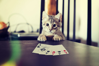Poker Cat Background for Android, iPhone and iPad