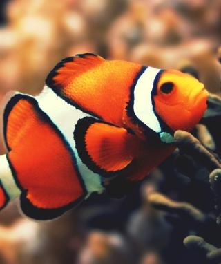 Nemo Fish - Obrázkek zdarma pro 320x480
