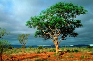 African Kruger National Park Picture for Android, iPhone and iPad