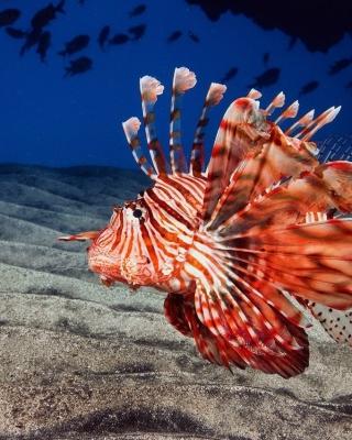 Pterois, Lionfish - Obrázkek zdarma pro Nokia Asha 308