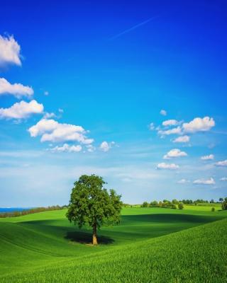 Green Hills - Fondos de pantalla gratis para Huawei G7300