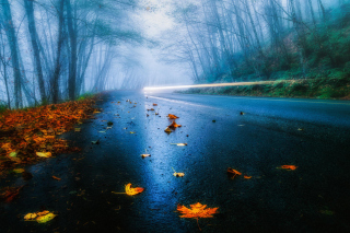 Free Mist Road Picture for Android, iPhone and iPad