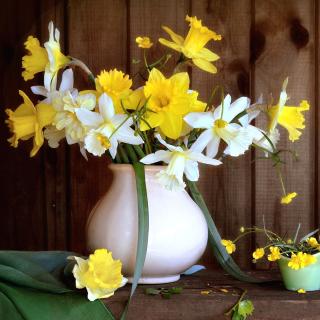 Daffodil Jug - Obrázkek zdarma pro 208x208