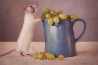Mouse Loves Grapes - Obrázkek zdarma pro 480x400