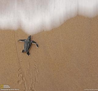 Sea And Turtle - Obrázkek zdarma pro 320x320