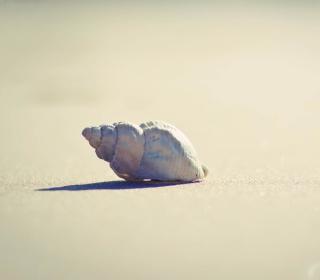 Lonely Seashell - Obrázkek zdarma pro 2048x2048