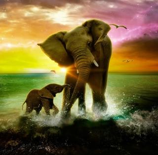 Elephant Family - Obrázkek zdarma pro 2048x2048