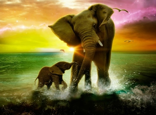 Elephant Family - Obrázkek zdarma pro Samsung Galaxy Nexus